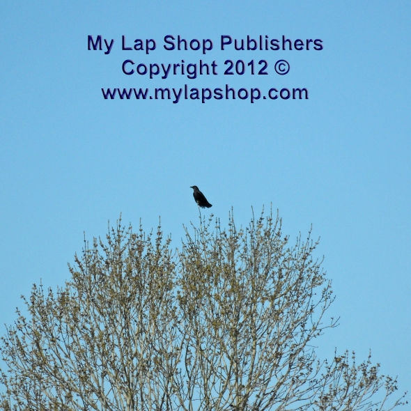 Crow On The Top Of A Tree